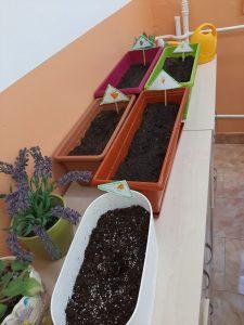 Нашата ферма за моркови
